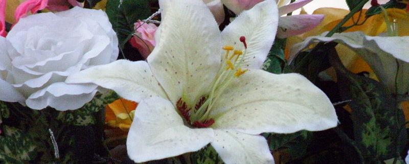 En av HJHs givere bestemte at ved hennes begravelse skulle det være minnegave til HJH. Vi takker så meget! Foto: Dnrivera/wikipedia